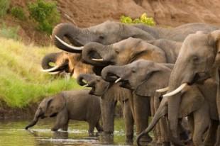 Top 7 Lucruri pe care nu le Stiai despre Elefanti