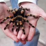 5 animale de companie deosebit de ciudate