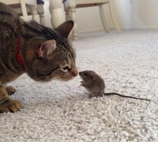 Top 5 lucruri pe care nu le stiai despre pisicute