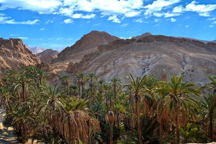 10107826-l-oasis-de-nefta-en-tunisie