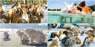 Top destinatii minunate unde vei putea admira animale in libertate