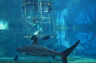 Top 10 cele mai mari acvarii din lume