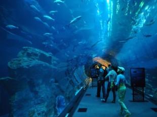 Topul celor mai frumoase acvarii de pe planeta