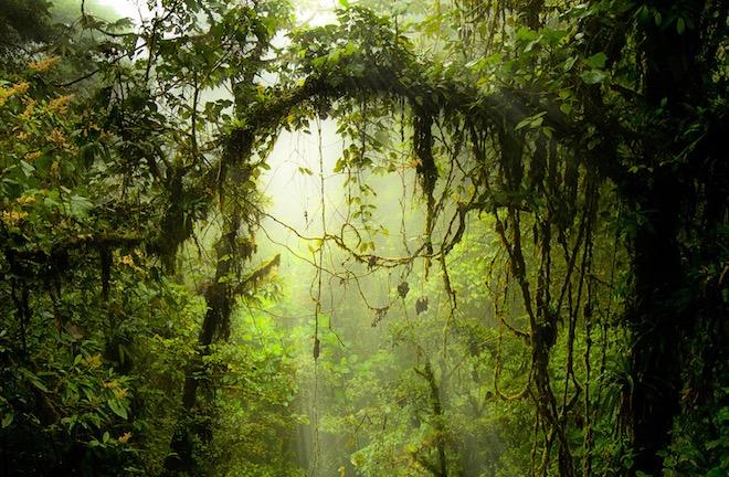 Reserva Biológica Bosque Nuboso Monteverde (Monteverde Cloud Forest Preserve), Costa Rica