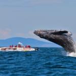 Top 5 locuri pentru observarea balenelor