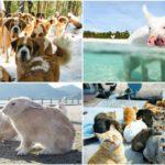 Top 7 locuri unde nu vei gasi altceva decat animale