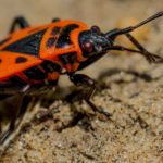 Top 4 insecte care ar trebui sa te trimita imediat la o firma de dezinsectie